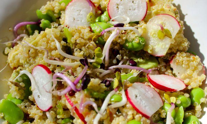 Quinoa, avocado and broadbean salad